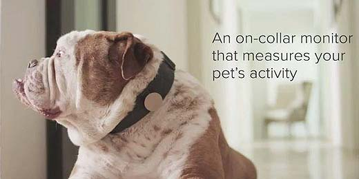 Quantified Dog: Der Activity-Tracker