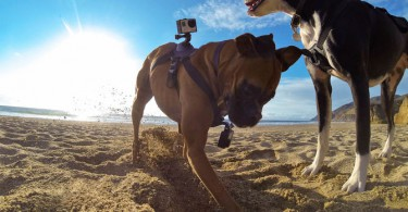 GoPro Fetch Hundegeschirr